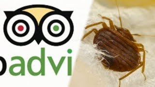 Nightmare! Hotel Sues Man For Reporting Bed Bugs