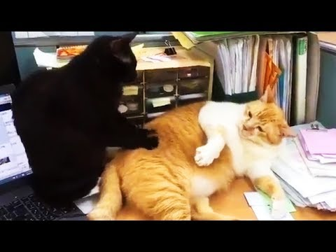 Funny Cats Doing Crazy Things 😹 Crazy Cats [Funny Pets]