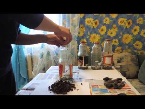 Приготовление настойки из бобровой струи