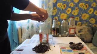Приготовление настойки из бобровой струи(Как приготовить настойку из бобровой струи Заказать бобровую струю можно тут: http://bobrovnet.com/moi-uslugi/, 2013-03-11T13:21:22.000Z)