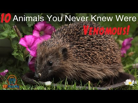 Top 10 Venomous Animals You Never Knew Were Venomous - A Summary in Under 120 Seconds