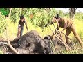 Injured Elephant: Humanity doing it's very best to save an Elephant as if it were one of them