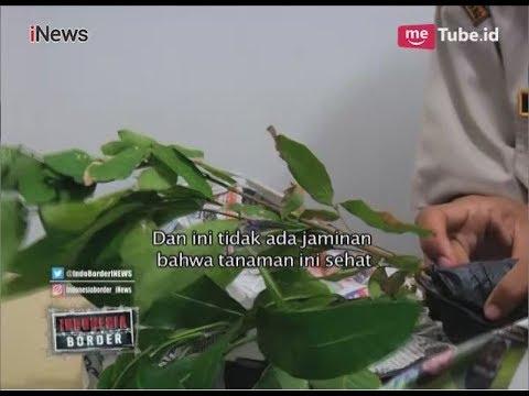Akibat Dilarang Bawa Tanaman & Buah dari Luar Negeri, 2 WNI Ngamuk Part 03 - Indonesia Border 15/03