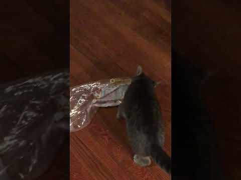 Greyson loves bread