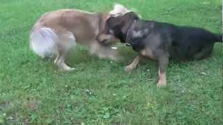 Ciekawe zwierzęta Zabawne śmieszne psy
