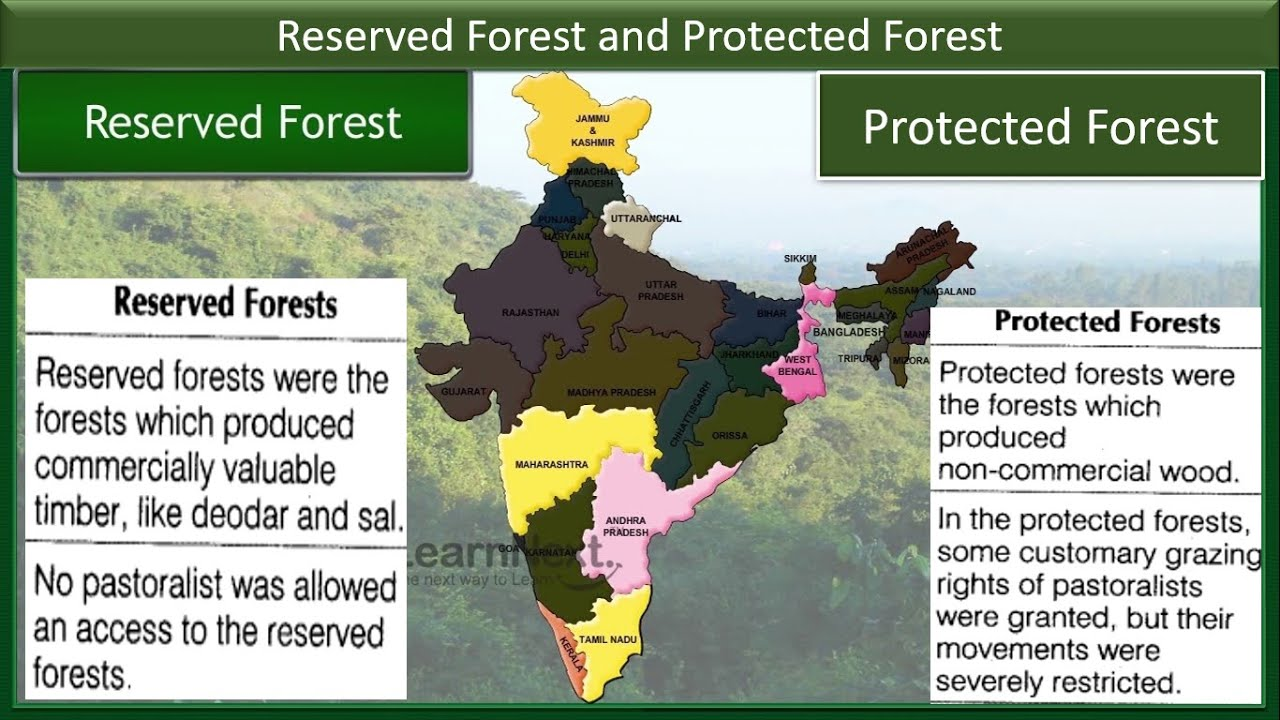 In case you're missing the forest for the trees, here are a few reminders why woodlands are wonderful. Reserved And Protected Forest Biodiversity Hot Spot I Part 2 Youtube