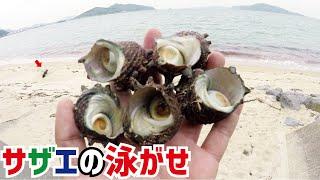潮干狩りの時期ですね掘ったサザエを餌にして釣りをしてみました。 http...