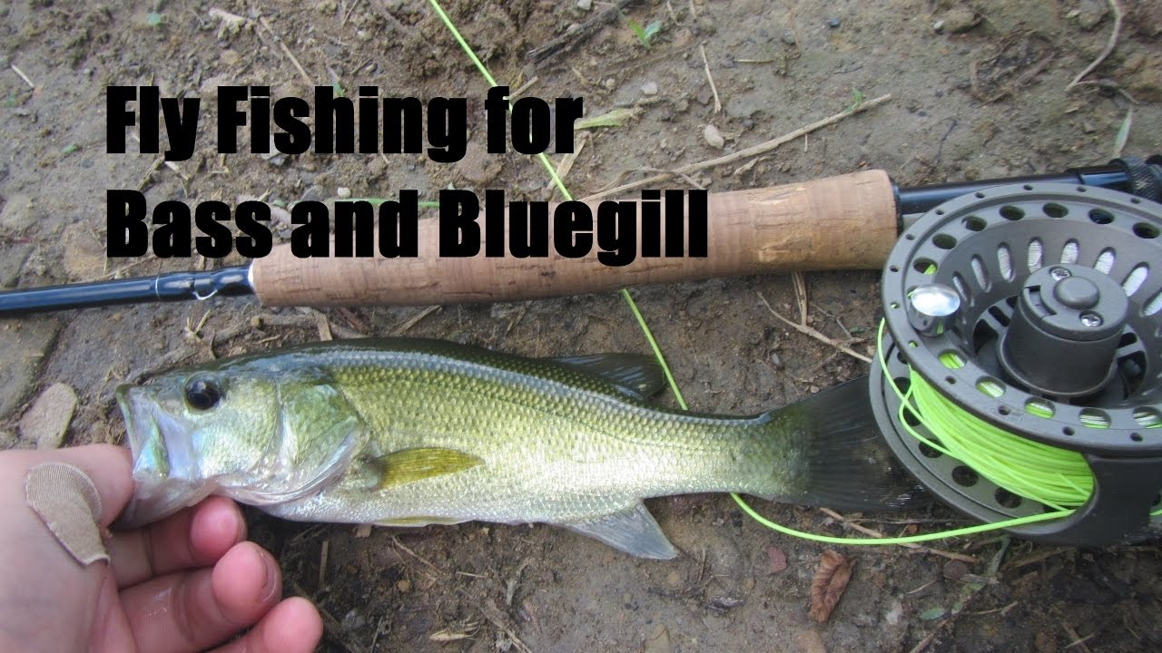 Fly fishing for bass and bluegill youtube for Fly fishing for bluegill