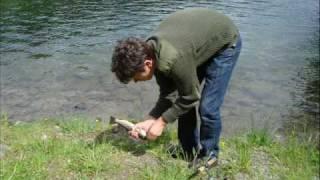 wildemann vliegvissen thumbnail
