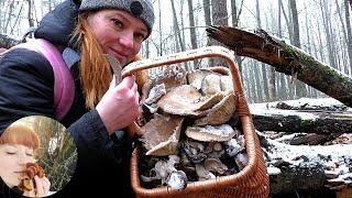 МОРОЖЕНАЯ ВЕШЕНКА - ЦЕЛАЯ КОРЗИНА! И приготовление грибов