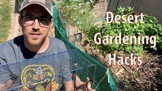 Desert Gardening Hacks for Spring and Summer Seasons
