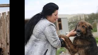 Городу нужен приют для бездомных животных
