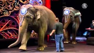 Американский цирк откажется от слонов в своих шоу (новости)