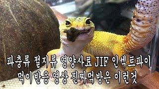 [벌러지닷컴]더이상생먹이로 고민하지 마세요! 파충류 절…