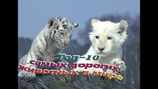 Топ  - 10 -  самых дорогих животных в мире