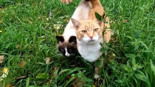 У кота и кошки любовь))
