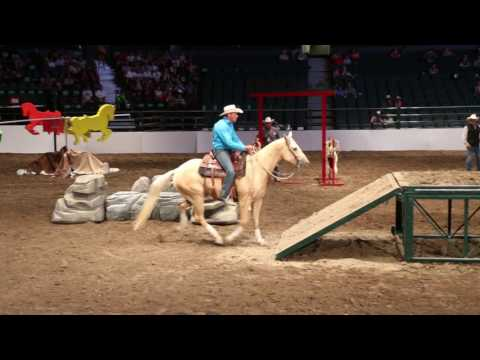 David Cowley - 2017 Calgary Stampede Cowboy Up Dog & Pony Team Challenge