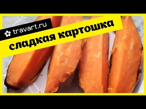 Вопрос: Как сварить сладкий картофель?