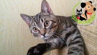 Котенок в доме первые дни, 5 советов