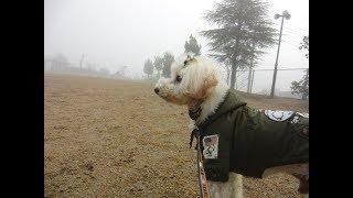 深い霧の朝。月齢12.1のお月様。 thumbnail