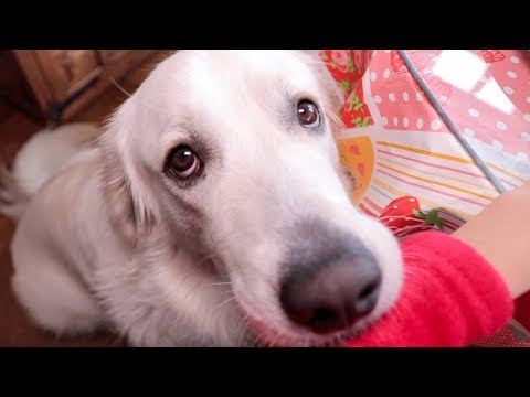 Food Beggar: Funny Dog Bailey Videos Compilation