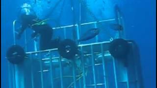 Deep Blue - The Biggest Great White Shark Ever Filmed: Returns