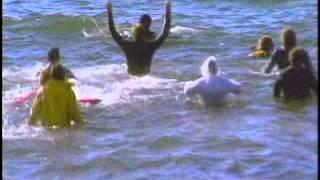 La Guía Máxima: Delfines