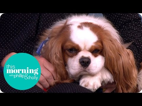 Dog People Vs Cat People | This Morning