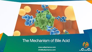 The mechanism of bile acid action