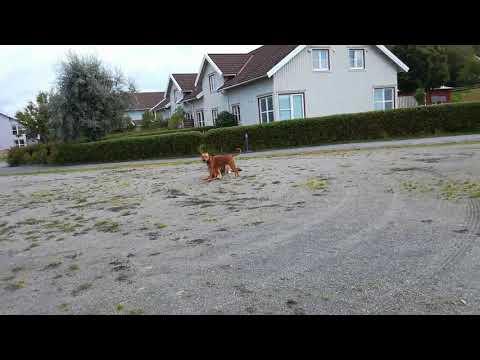 DoggieDog Hundpromenader & Hundpensionat(1)