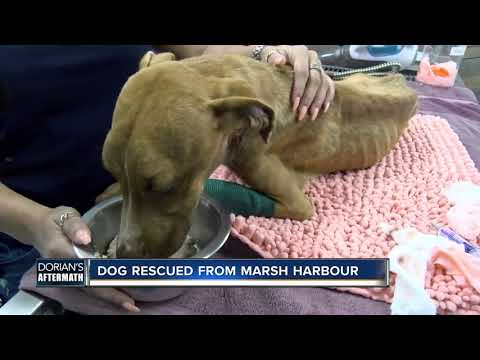 Renee's Adoptable Pet Picks - Miracle Dog Pulled from Rubble in Bahamas