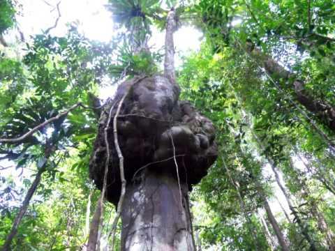 Bruits de la forêt Guyanaise