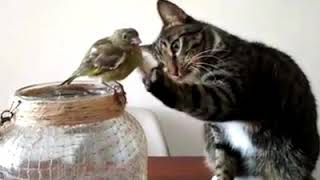Funny Birds and Pets