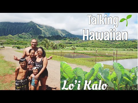 talking-hawaiian-at-the-loʻi-kalo-(taro-patch)!