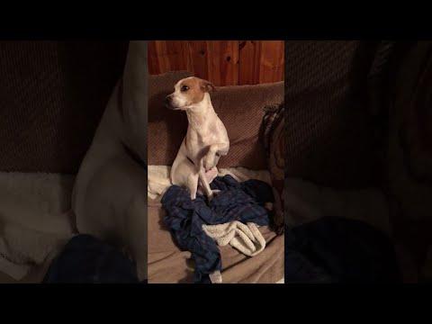 Guilty Dog Eats Granola Bar || ViralHog