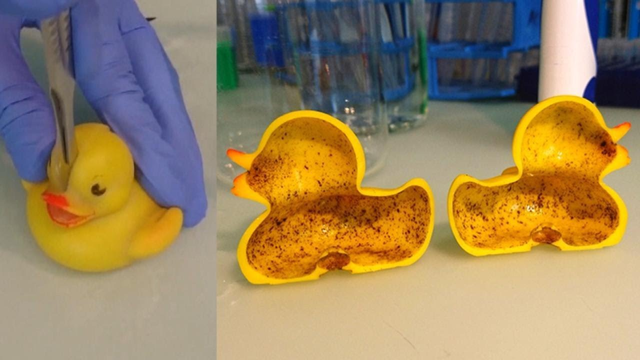 Bacteria Lurking In Your Rubber Ducky