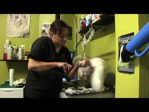 Salon De Toilettage Chiens, Chats Et Rongeurs à Trélazé (Angers) - Canycat