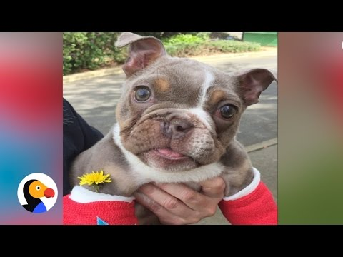 Puppy Dumped Because He Was Born Different | The Dodo