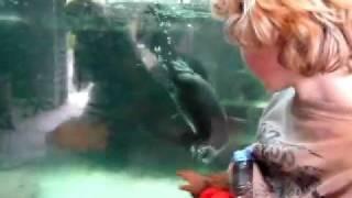 Zoo Praha - Romano heeft contact met een pinquin  www.vakantietsjechie.cz