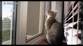 Приколы 2016. Смешное видео животные. Приколы с котами. Новинки приколов