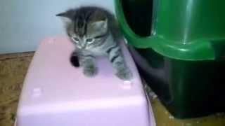 Домашние котята ждут хозяев