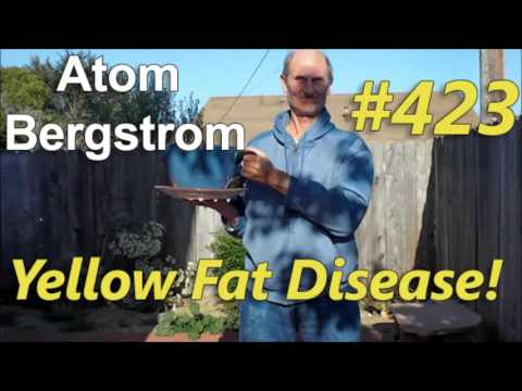 Atom bergstrom the dangers of fish oils yellow fat for Dangers of fish oil