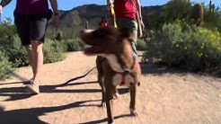 Maricopa County Animal Care & Control and Parks & Recreation Depts.
