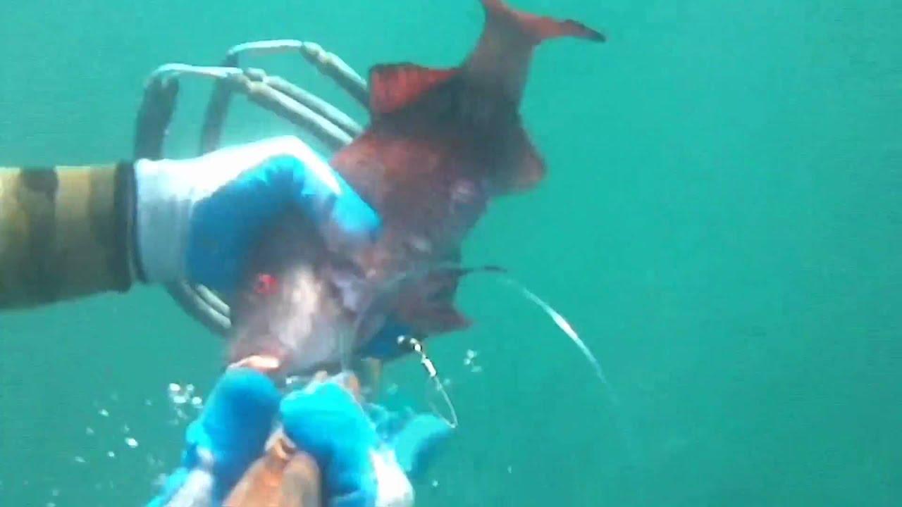 Octopus – HawaiiFlowersLeis
