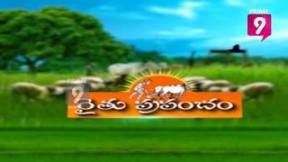 Red Sandalwood Plantation - Erra Chandanam | Special Broadcast | ...