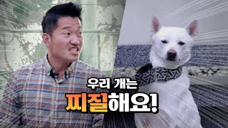 Is Jindo dog lame? Kang trainer who requested additional recording for the first time.