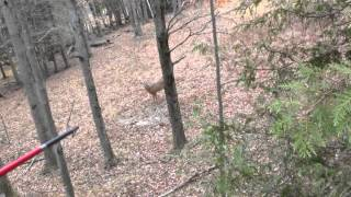 Michigan deer bow hunt 2013 -13 point monster buck