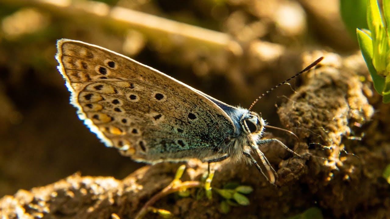 Cazadores de mariposas