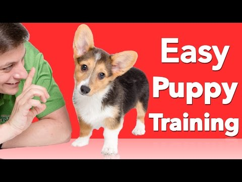 How to Teach your Dog 3 Things Right Now!