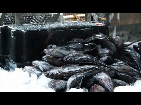 ROADTRIP1 - FISH AND FRIENDS TODAY - CHINCOTEAGUE, VA BOUND